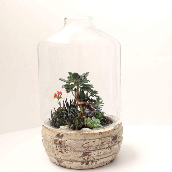 bonsai-succulent-terrarium