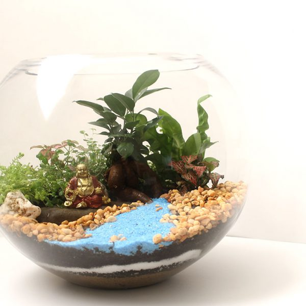 buddha-pot-belly-fig-terrarium
