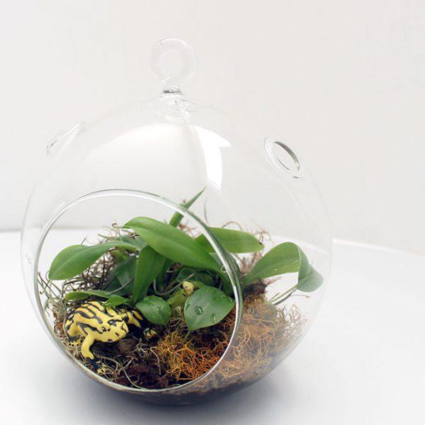 corroboree-frog-pitcher-plant-terrarium