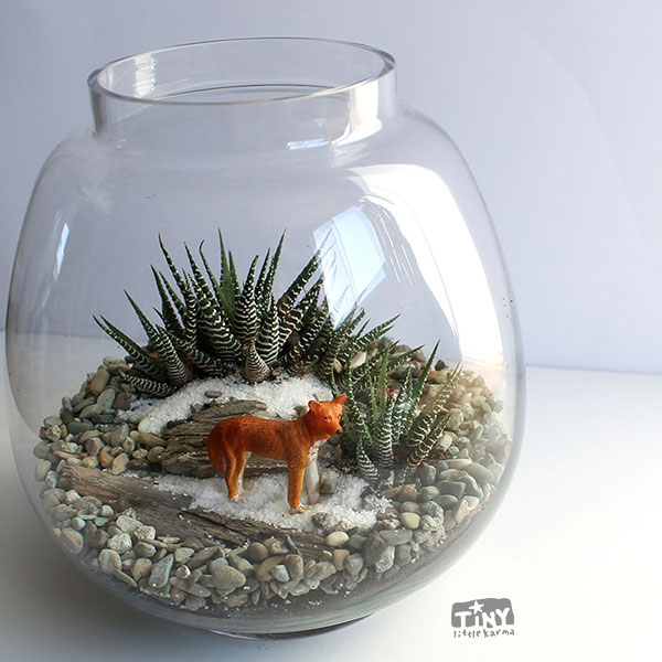 succulent-terrarium-with-dingo