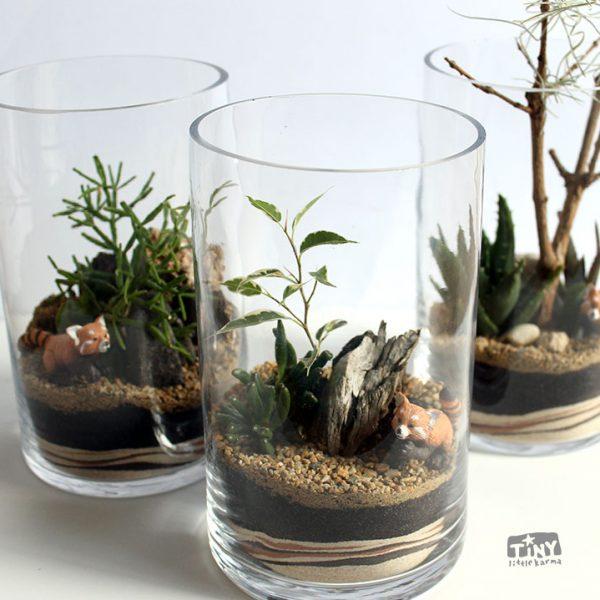 terrarium-succulent-red-panda