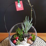 succulent-terrarium-oblique-cut