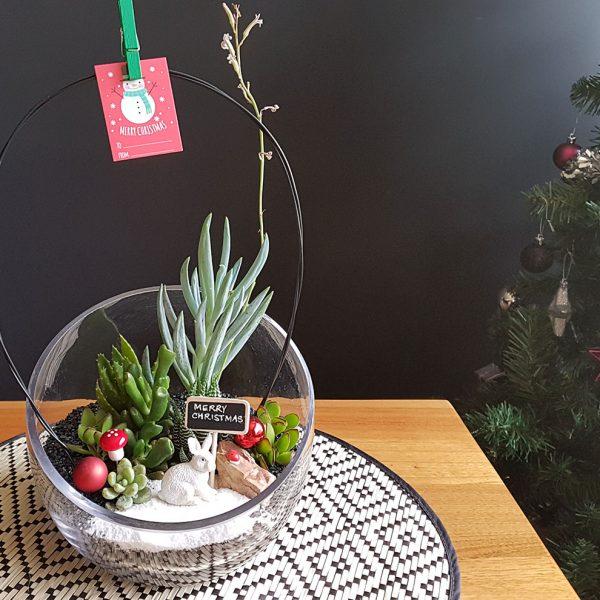succulent terrarium oblique cut christmas theme