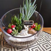succulent-terrarium-oblique-cut-christmas-gift