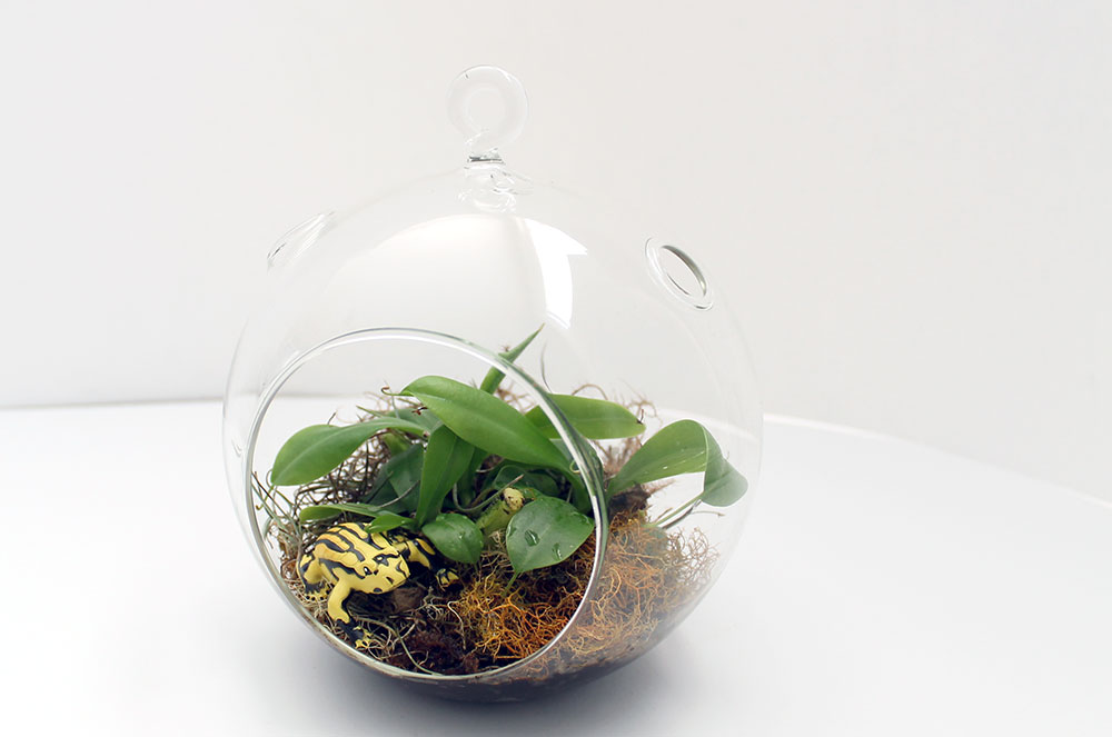 Corroboree Frog And Carnivorous Pitcher Plants In An Orb Terrarium