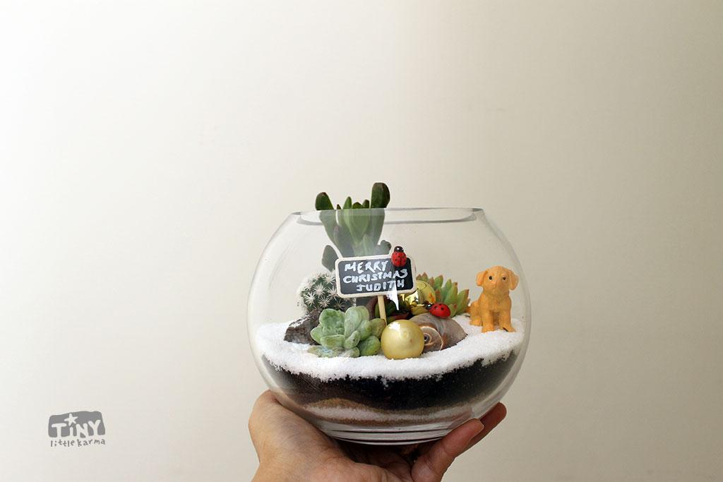Fish Bowl Small Succulent Terrarium Tiny Little Karma