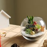 Succulent Terrarium Small Fish Bowl