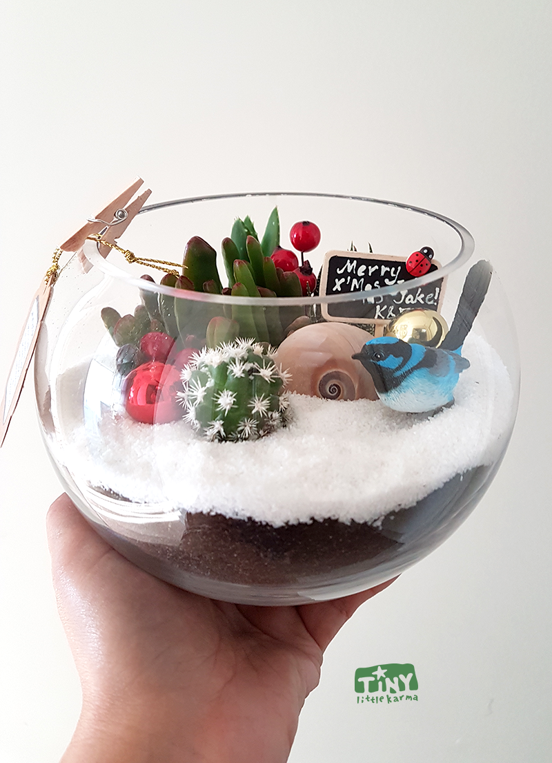 Fish Bowl Small Succulent Terrarium Tiny Little Karma