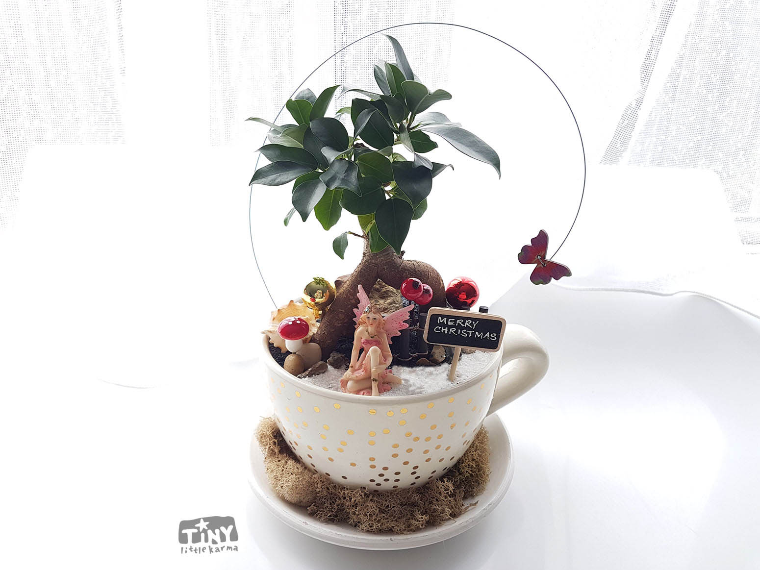 Pot Belly Fig Bonsai Fairy Garden In A Cup And Saucer Planter Tiny