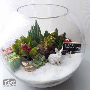 succulent-terrarium christmas fish bowl